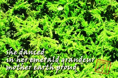 1 emerald grandeur